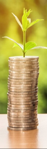 Bright image featuring a stack of coins sprouting a small plant, showing financial growth